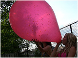 Video clip for sale of Raven and Holly inflating and popping a 4-foot Chinese speckled balloon